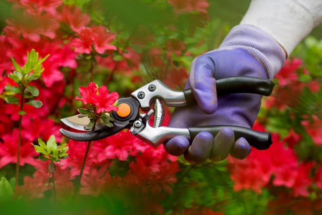 photo of cutting flowers