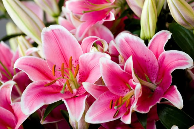 photo of lillies