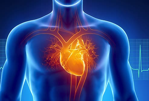 pictures: how heart disease affects your body, Muscles