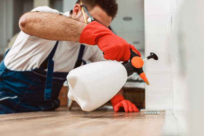 photo of exterminator working in home