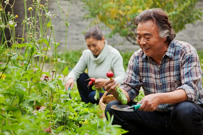 photo of mature couple gardening