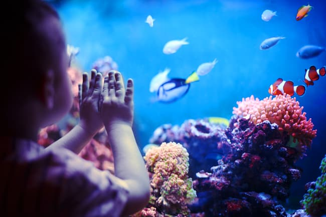 photo of child watching fish