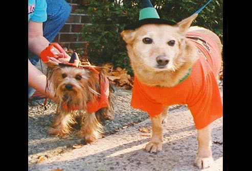 Big and little dog dressed as witches