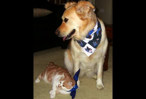 Cat and dog wearing hockey fan bandanas