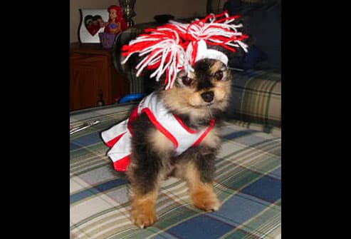 Dog wearing cheerleader uniform and pompom hat