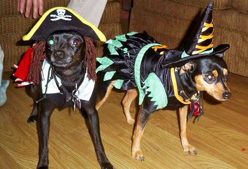 Two dogs dressed as a pirate and a witch