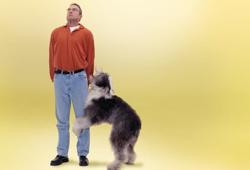 Dog Humping Embarrassed Man's Leg