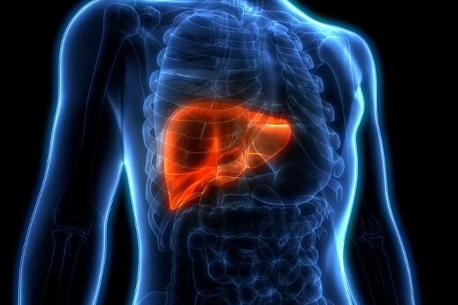 photo illustration of liver