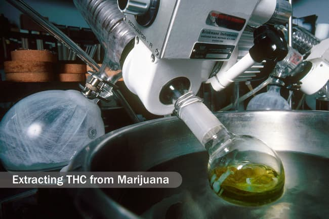 marijuana medical research