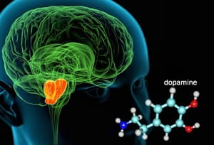 illustration of mid brain and dopamine molecule