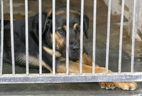 Sad Dog at Shelter
