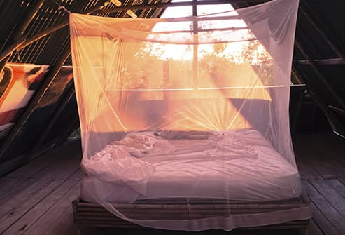 mosquito netting over bed