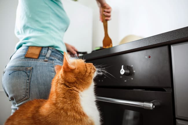 person cooking for cat