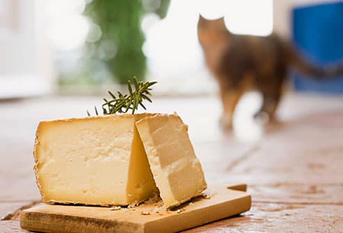 cat approaching cheese