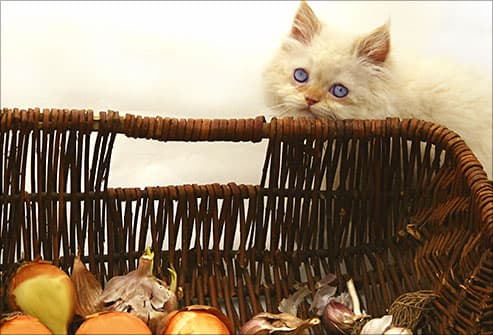 cat near basket of onions