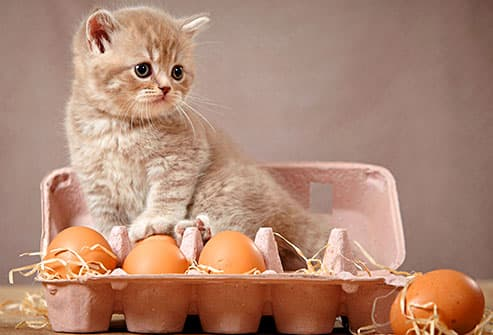 kitten in an egg carton