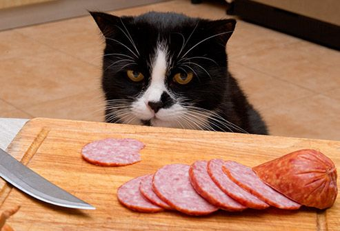 cat looking at meat