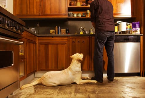 Dog patiently waiting on floor while owner cooks