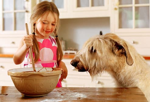 Girl mixing homemade dog treats in front of dog