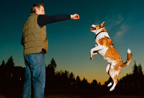 Man offering a treat to a dog jumping in midair
