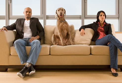 Dog sitting between couple on sofa