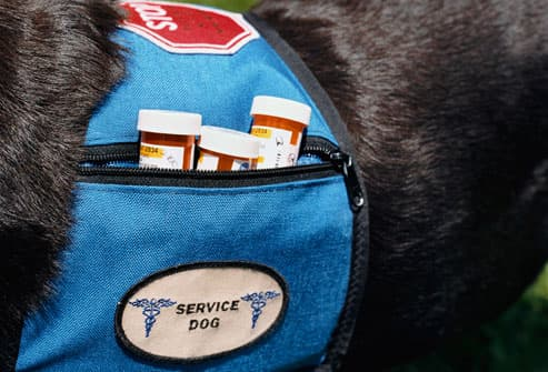 Pills in backpack of service dog
