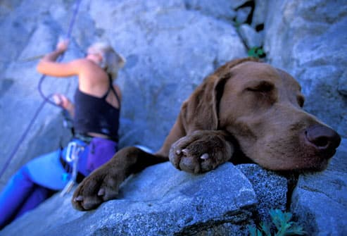Dog napping near woman rock climber