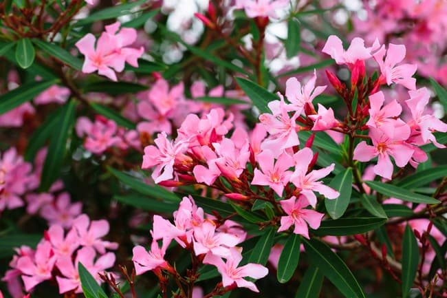 pink flowers on bush