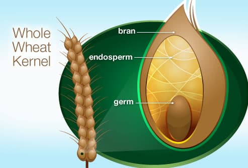 Illustration Of Whole Wheat Kernel