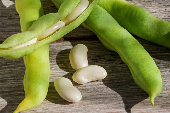 photo of lima beans