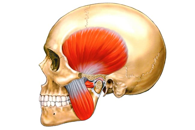 illustration of tmj
