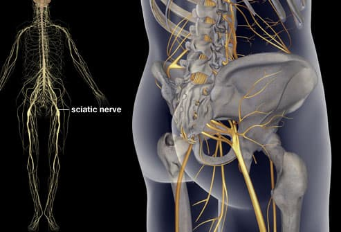 sciatica pictures: symptoms, causes, and treatments, Cephalic Vein