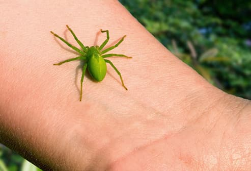 green spider on wrist close up