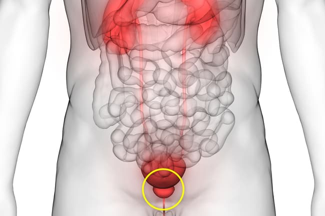 illustration of prostate