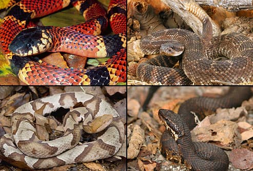 How to Survive Snake Season, Even if You Get Bitten