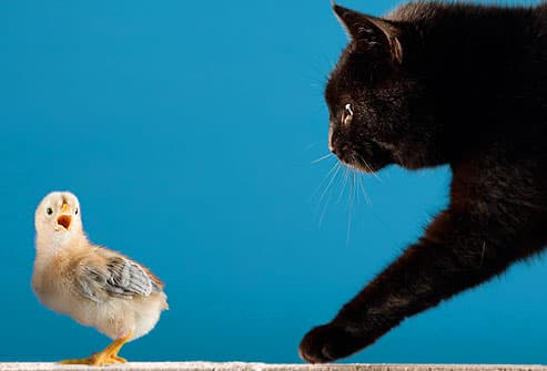 Cat About to Pounce on Bird