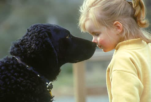 Girl and Dog Touching Noses