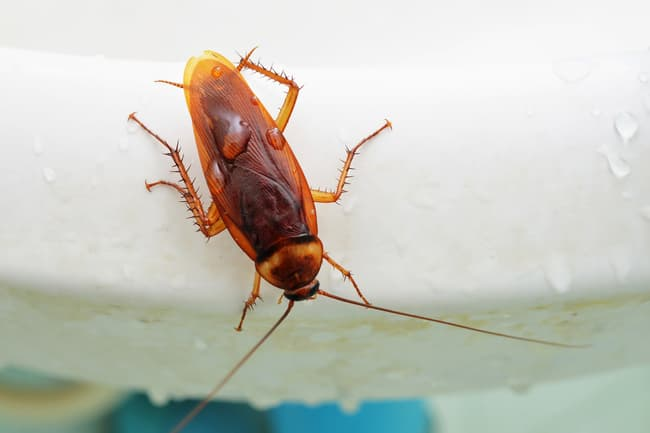 photo of cockroach on toilet