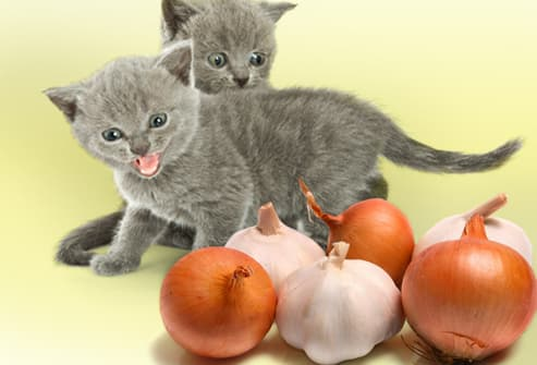 Kittens hissing at garlic and onions