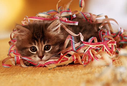 Kitten playing with ribbons