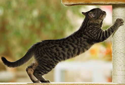 Kitten using scratching post