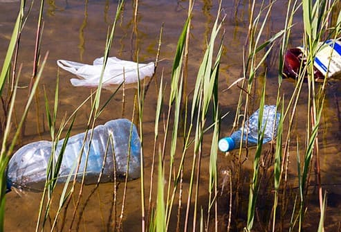 garbage among the reeds