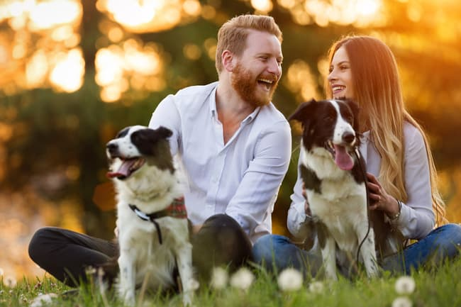 couple relaxing with dogs
