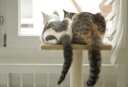Two cats looking out the window