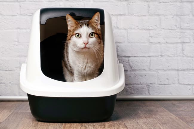 photo of cat in litter box