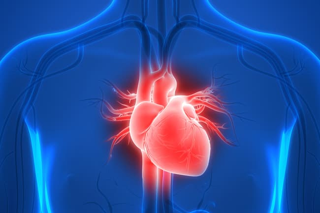 photo of human heart illustration
