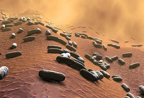 Sem image of rod shaped bacteria