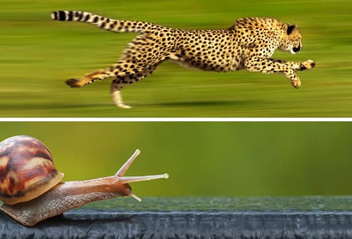 snail and cheetah diptych