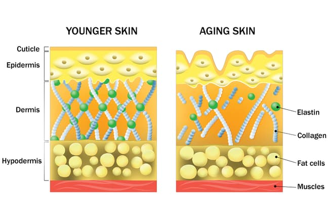 photo of younger vs aging skin