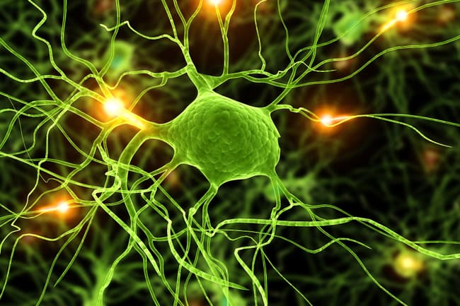 photo of active neurons